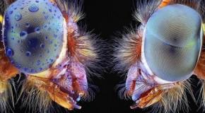 نمایش پرتره خارقالعاده از حشرات طبیعت